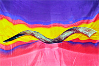 Shofar: Yeminite Jumbo Shofar (Polished)